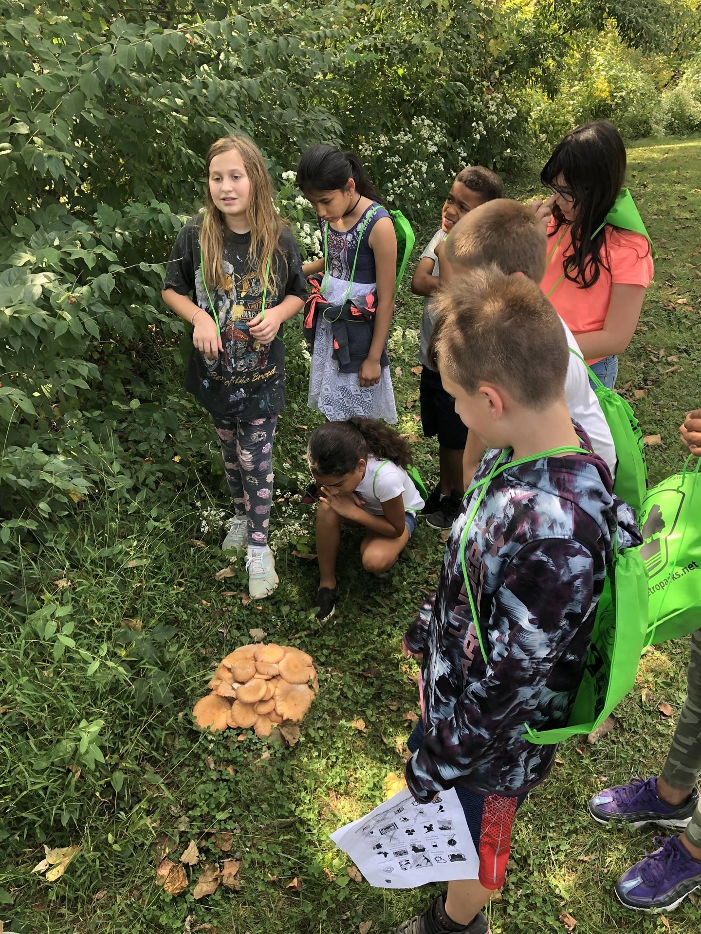 Exploring an ecosystem