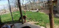 Preschool Zoo Trip